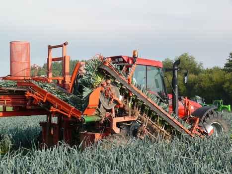 Leek harvesters