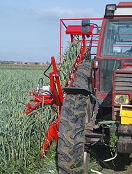 Gemüsetechnik